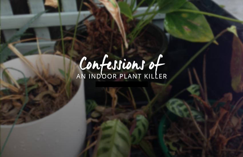 indoor-plant-killer