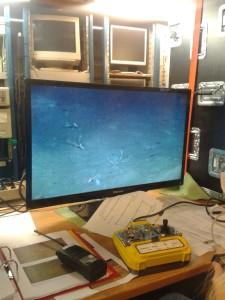 Nokre av skapningane som lev på 1100 meters djupne