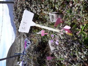 Soil measurement plott