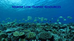 Low trophic resources in marine habitat
