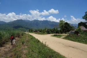 Sugarcane agroforestry - Kilombero Valley